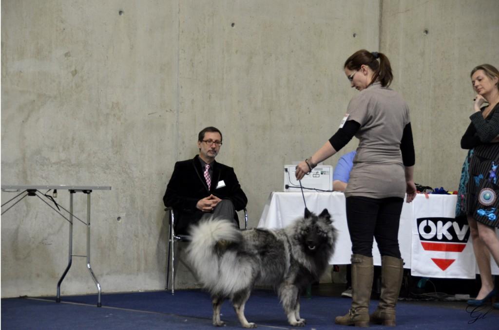 IHA Graz 8.3.2014 - 2